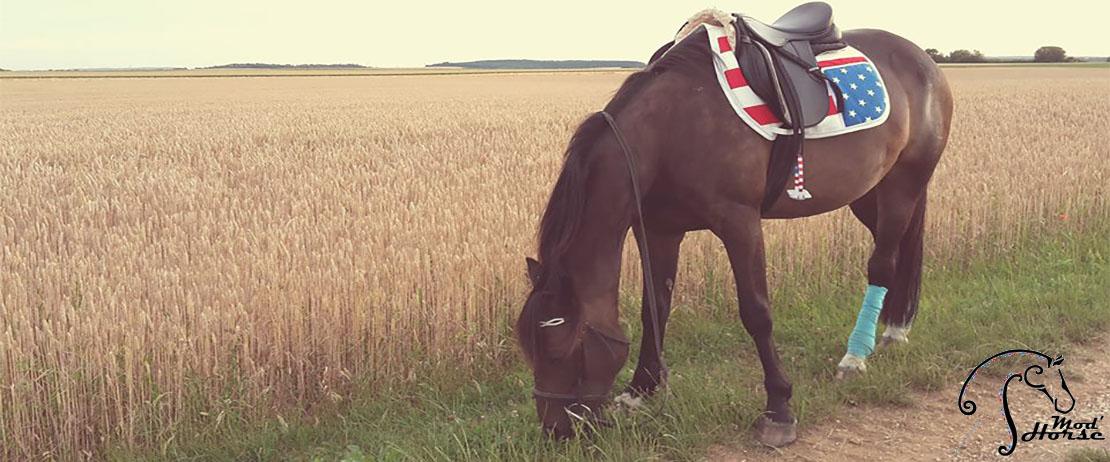 Mod'Horse